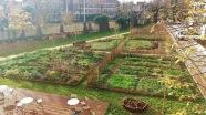 Vue d'ensemble du jardin potager